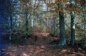 cecilys-beech-woods1.jpg