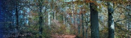 cropped-cecilys-beech-woods.jpg