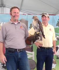 Majesty, the Red-tailed Hawk