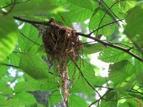 Acadian nest 2016