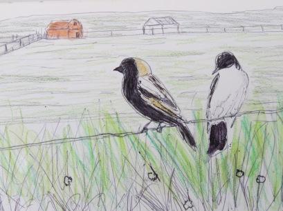 Bird-A-Thon 2016 231
