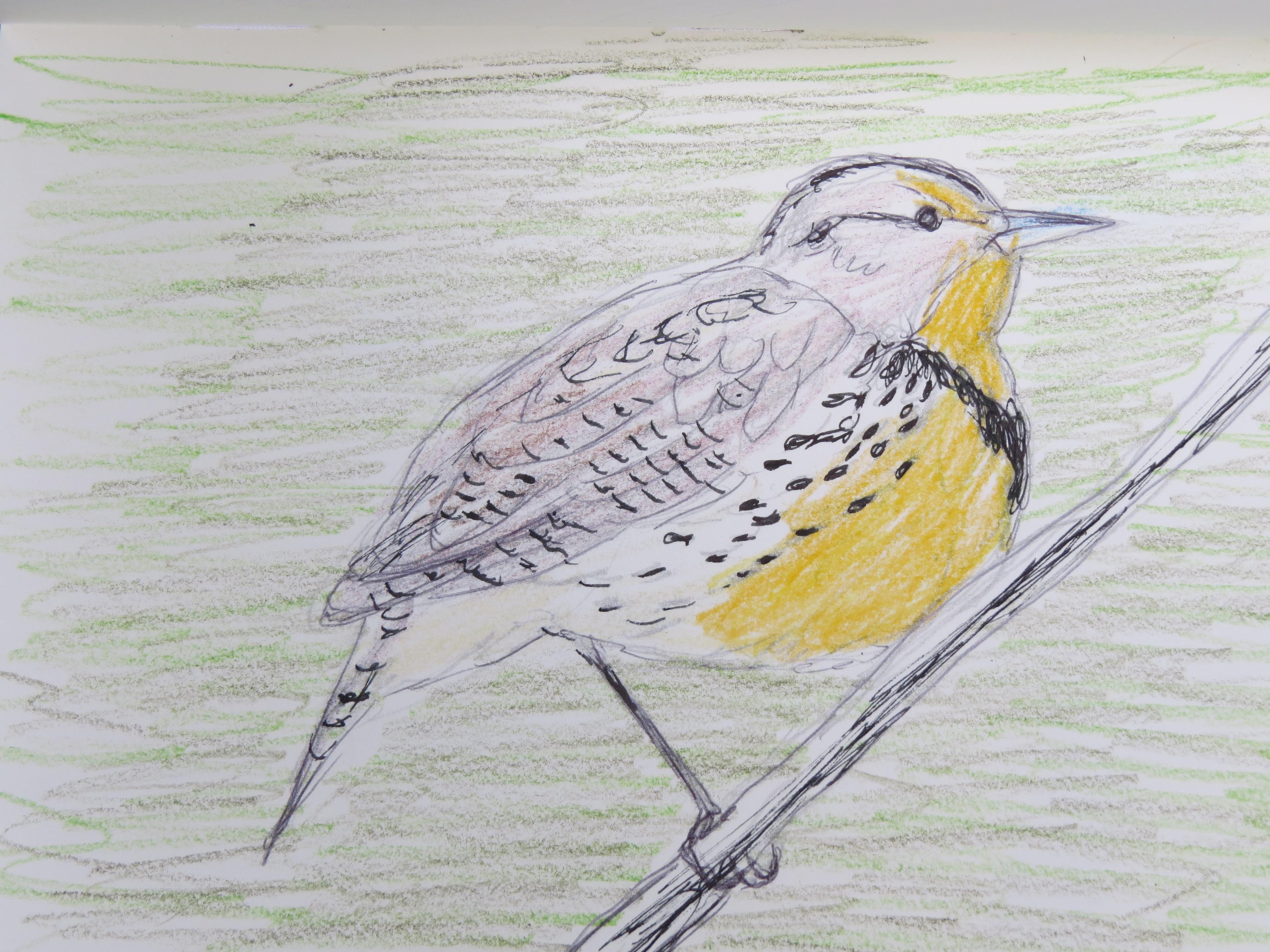Bird-A-Thon 2016 233.JPG