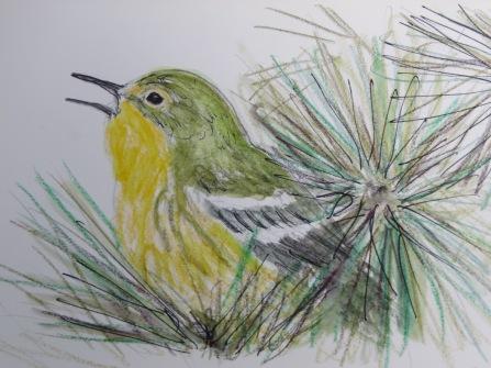 Bird-A-Thon 2016 235