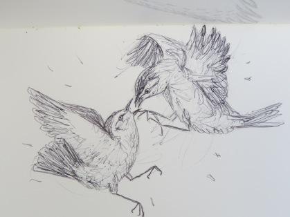 Bird-A-Thon 2016 239