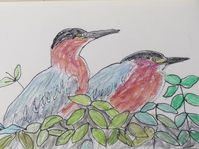 Green Herons 2018