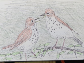 Wood Thrush argument 2018 (1)