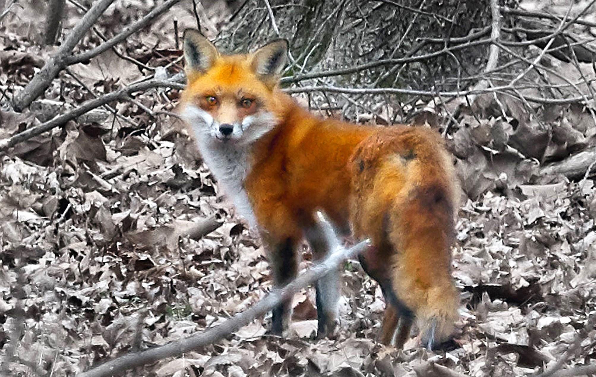 Fox2byElliotDash